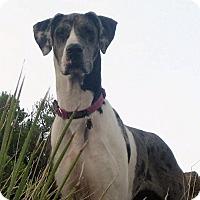 Adopt A Pet :: Annabelle - Mesa, AZ