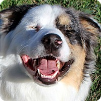 Adopt A Pet :: Murphy - SIGHT IMPAIRED - Post Falls, ID