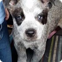 Adopt A Pet :: Didgeridoo - Gainesville, FL