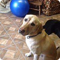 Adopt A Pet :: Hank - Lewisville, IN