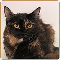 Adopt A Pet :: Bailey April - Glendale, AZ
