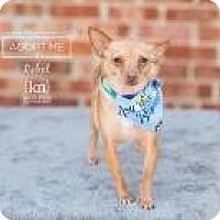 Adopt A Pet :: Rebel - Shawnee Mission, KS