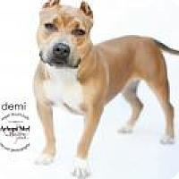 Adopt A Pet :: DEMI - LOS ANGELES, CA