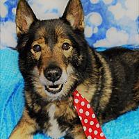 Adopt A Pet :: Pacino - Waupaca, WI