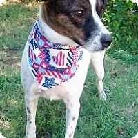 Adopt A Pet :: Wyatt - Vernon, TX