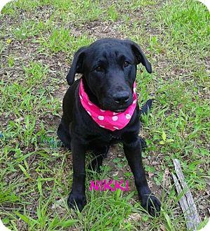 Labrador Retriever Mix Dog for adoption in Princeton, Kentucky - NIKKI