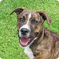 Adopt A Pet :: Tapanga - Madison, IN
