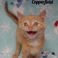 Adopt A Pet :: Cooperfield - Harrisville, WV