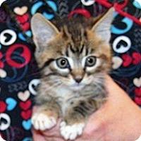 Adopt A Pet :: Summer - Wildomar, CA