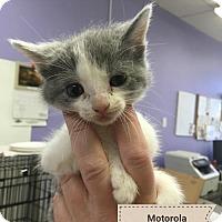 Adopt A Pet :: Motorola - Denver, CO