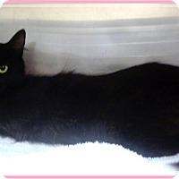 Adopt A Pet :: SIENNA - Marietta, GA