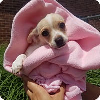 Adopt A Pet :: JULIE - New Windsor, NY
