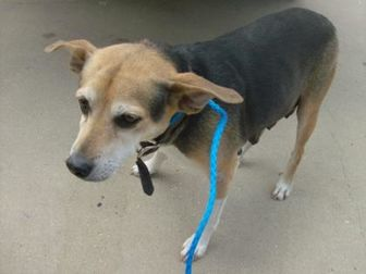 Terrier (Unknown Type, Small) Mix Dog for adoption in West Monroe, Louisiana - Dixie