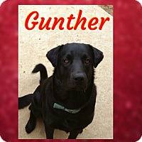 Adopt A Pet :: Gunter - Madison, AL