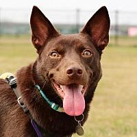 Adopt A Pet :: Kobe - San Mateo, CA