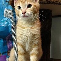 Adopt A Pet :: Carlin - Garden City, MI