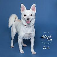 Adopt A Pet :: Turk - Houston, TX