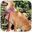 Photo 3 - Nova Scotia Duck-Tolling Retriever/Labrador Retriever Mix Dog for adoption in Pawling, New York - HEATHER