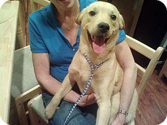 Labrador Retriever Mix Dog for adoption in Manassas, Virginia - Charlie