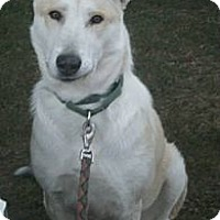 Adopt A Pet :: Damsel - Crescent City, CA