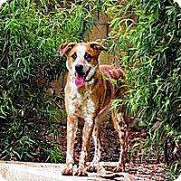 Adopt A Pet :: FANTASIA - Phoenix, AZ