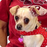 Adopt A Pet :: Cheese - Corona, CA