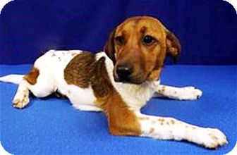 Terrier (Unknown Type, Small) Mix Dog for adoption in LAFAYETTE, Louisiana - MAY