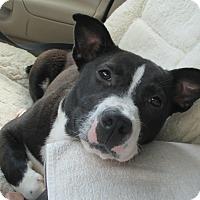 Adopt A Pet :: Marilyn - Jacksonville, FL