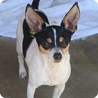 Adopt A Pet :: Bing - Salem, NH