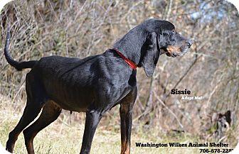 Black and Tan Coonhound Mix Dog for adoption in Washington, Georgia - Sissie
