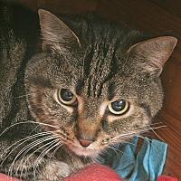 Adopt A Pet :: Spirit - Chicago, IL