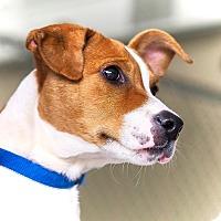 Adopt A Pet :: Floppy - Lincolnton, NC