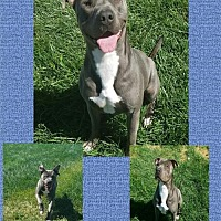 Adopt A Pet :: TAZ - Fairfield, CA