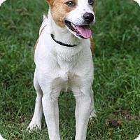 Adopt A Pet :: Brooke - Conyers, GA