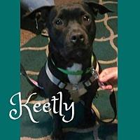 Adopt A Pet :: Keetly - Des Moines, IA