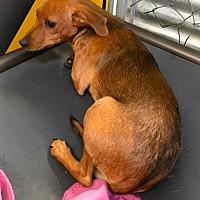Adopt A Pet :: MANNY - Chico, CA