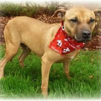 Adopt A Pet :: Dori - Irmo, SC