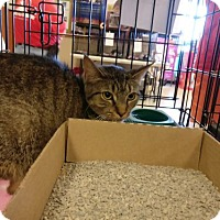 Adopt A Pet :: Kali - Avon, OH