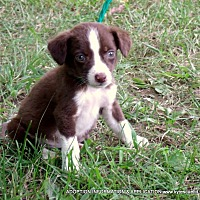 Adopt A Pet :: BUTTONS/ADOPTED - parissipany, NJ