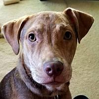 Adopt A Pet :: Maximilian - Marlton, NJ
