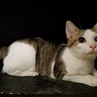 Adopt A Pet :: Louie - Fairbury, NE