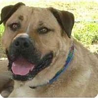 Adopt A Pet :: COLE - Phoenix, AZ