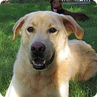 Adopt A Pet :: Austin - New Canaan, CT