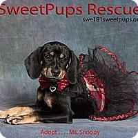Adopt A Pet :: Ms. Snoopy - Vidor, TX
