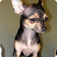 Adopt A Pet :: *Maximillian - PENDING - Westport, CT