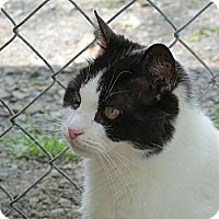 Adopt A Pet :: Gemme - Plattekill, NY