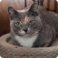 Adopt A Pet :: Porkchop - Byron Center, MI
