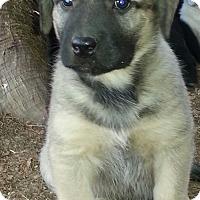 Adopt A Pet :: Tammy - Greenville, RI
