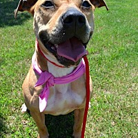 Adopt A Pet :: Momma - Dallas, GA