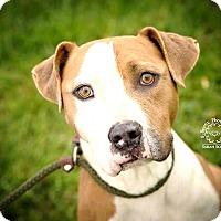 Adopt A Pet :: Hank - ADOPTED! - Zanesville, OH